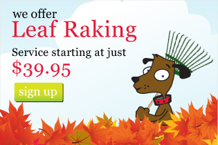 We offer leaf raking
