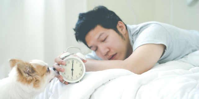 Man sleeping in bed with clock and dog waking him up