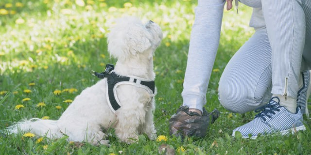How To Get Rid Of The Smell Of Dog Poop In Your Yard Poop