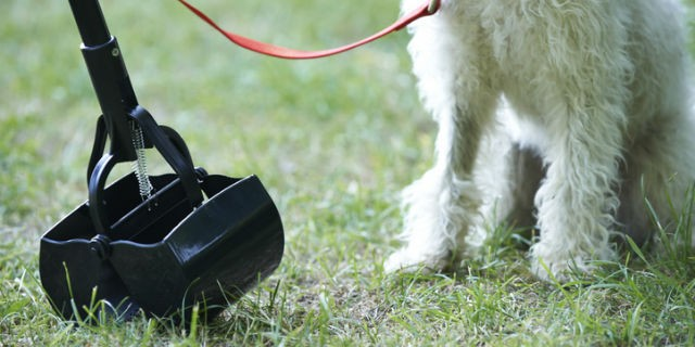 Dog pooper scooper picking up waste on grass in front of dog