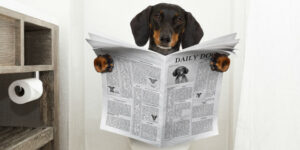 Dog Sitting on Toilet Reading a Fort Worth Texas Pooper Scooper Service Newspaper