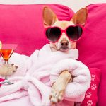 Calming dog with sunglasses lounging in bathrobe sipping a refreshment.